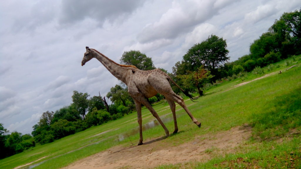 self drive safari zambia
