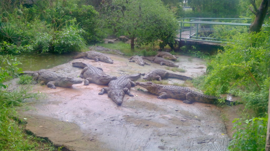 crocodile farm zambia