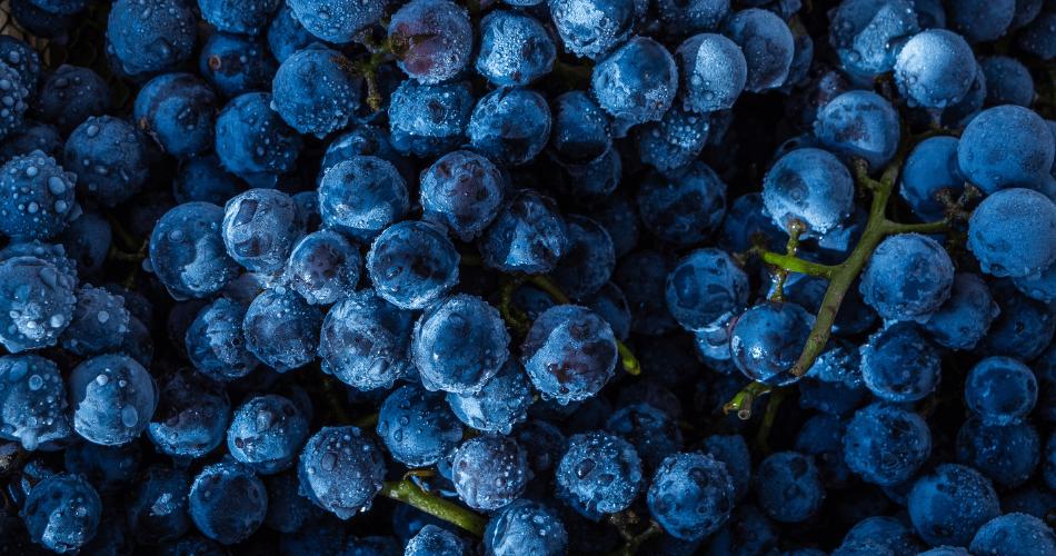 frozen grapes - gallivant